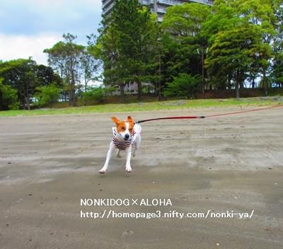 Aloha13