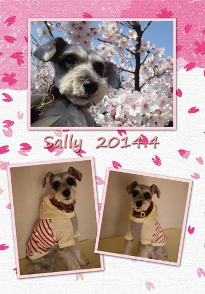 Sally201404_2